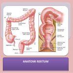 anatomi rektrum